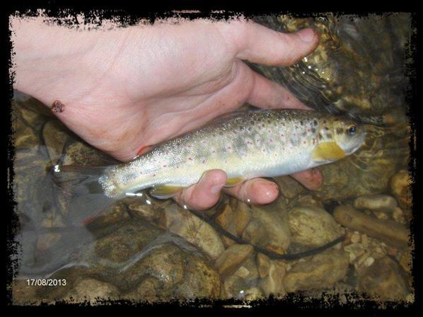 Petite sortit au toc,pas mal de poisson mais beaucoup de décroché