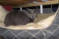 Un élevage sur la sellette : ces trois chats ont été récupérés dans des conditions déplorables et sont très sauvages.