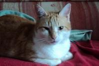 notre chat