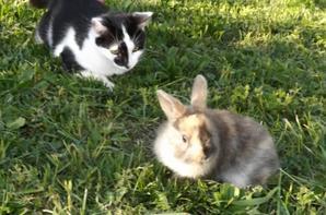 Boubou, Iris, Joy