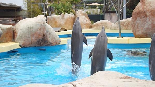 rencontre avec les d'auphin 2