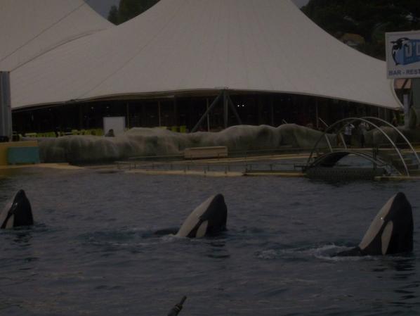 les orque