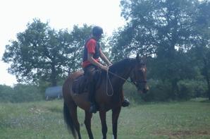 cheval loisir