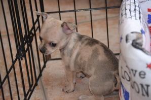 Olly  6 semaines mâle