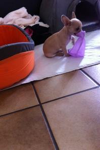 Owen rebaptisé Pépito dans sa nouvelle famille