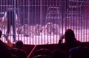 Le cirque de St Petesbourg
