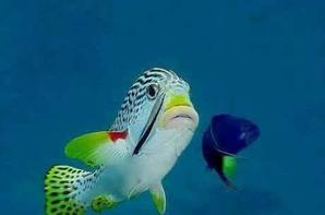 Exotic Fisch