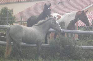 ami ami avec les voisins de pré