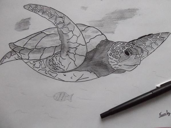 Deux merveilleuses tortues pour une voisine...