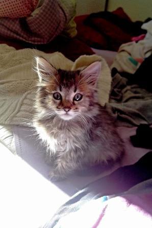 Loulou bébé. 2/5 mois