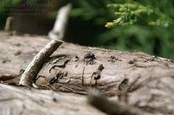 Macrophotographie:Plantes et insecte,bienvenu au monde miniature!