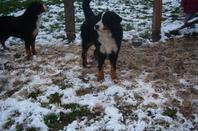 mes filles dan la neige