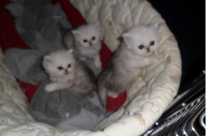 ils sont nés le 19 avril 2015