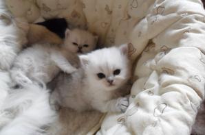 Caline et ses deux petits nés le 14 mars 2016