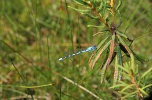 Quelques insectes sympa