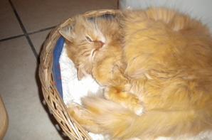 Chaman chat de la maison né a villiers st georges 77