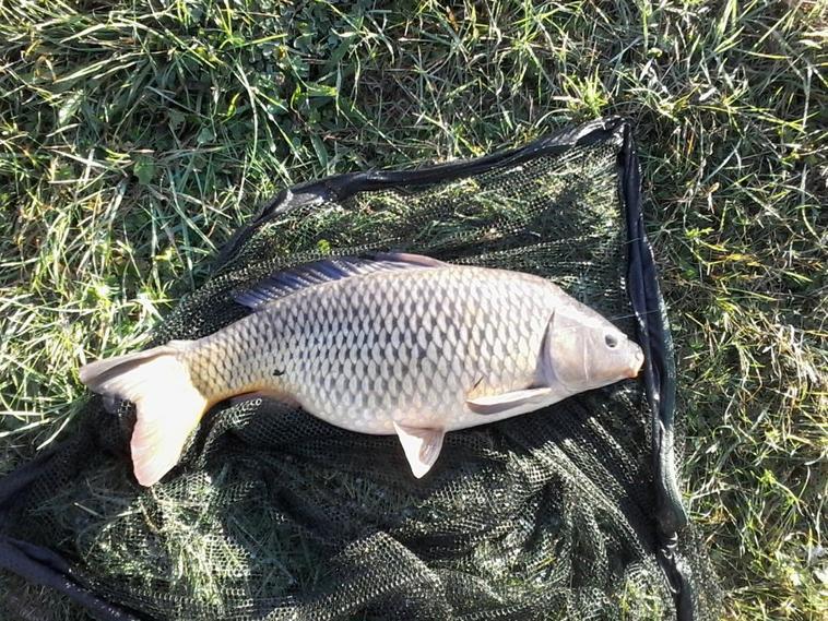 Pêche a la carpe en solo