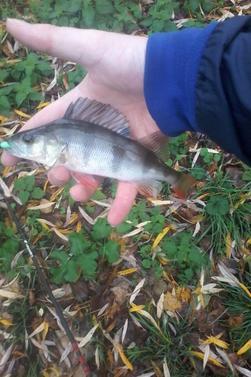 Le poisson actifs comme hier