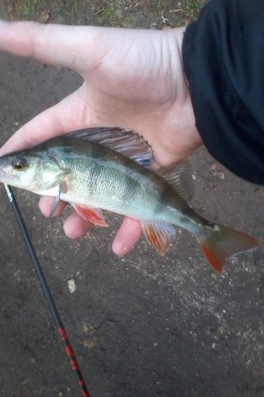 Aujourd'hui  moin de fish mes pas capo ☺