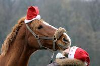 Année 2012 , Joyeuses Fêtes !
