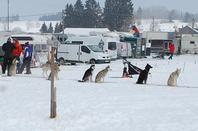 Courses de chiens pôlaires aux Fourgs.