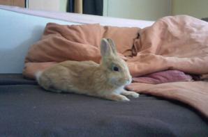présentation: Tinou mon lapin :D