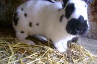 Nouvelles de Vanille (3 semaines de gestation)