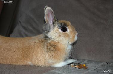 Un lapin qui aime le canard