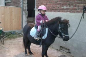 ma vie mes chevaux  ma passion <3
