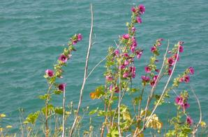 Fleurs que j' aime !......^^