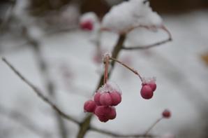 Esquisse Neige ;) du 1er Décembre...
