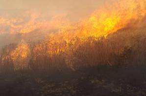Le feu a détruit 100 hectares de récolte sur pied et de chaume. ( Sdis78 )