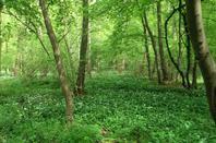 Forêt au printemps