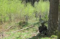 Partie du 05/05/2013, avec les KnaG et Green Aug