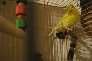 Les canaris ont déménagé