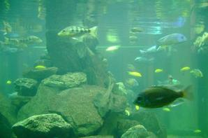 Zoo d'Anvers 2010 - Des poissons