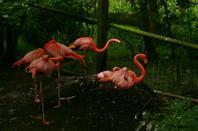 Pairi Daiza 2009 - Ibis et autres échassiers