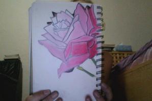 rose en couleur