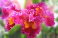 Orchidée <3