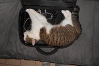 mon chat noisette.