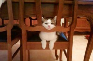 mon chat noisette tu me manque ma petite noisette :(