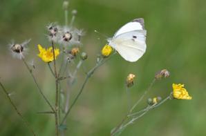 La nature et les Insectes