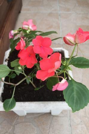 Les premières fleurs au jardin !