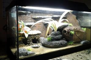 Aquarium a vendre