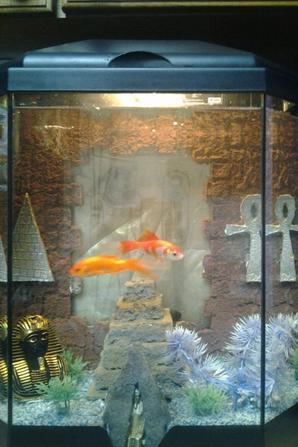 Aquarium vendu