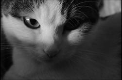 Pimousse le chat !