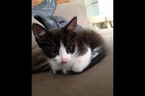 My cat <3