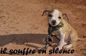 un animal ne pleure pas mais il souffre en silence