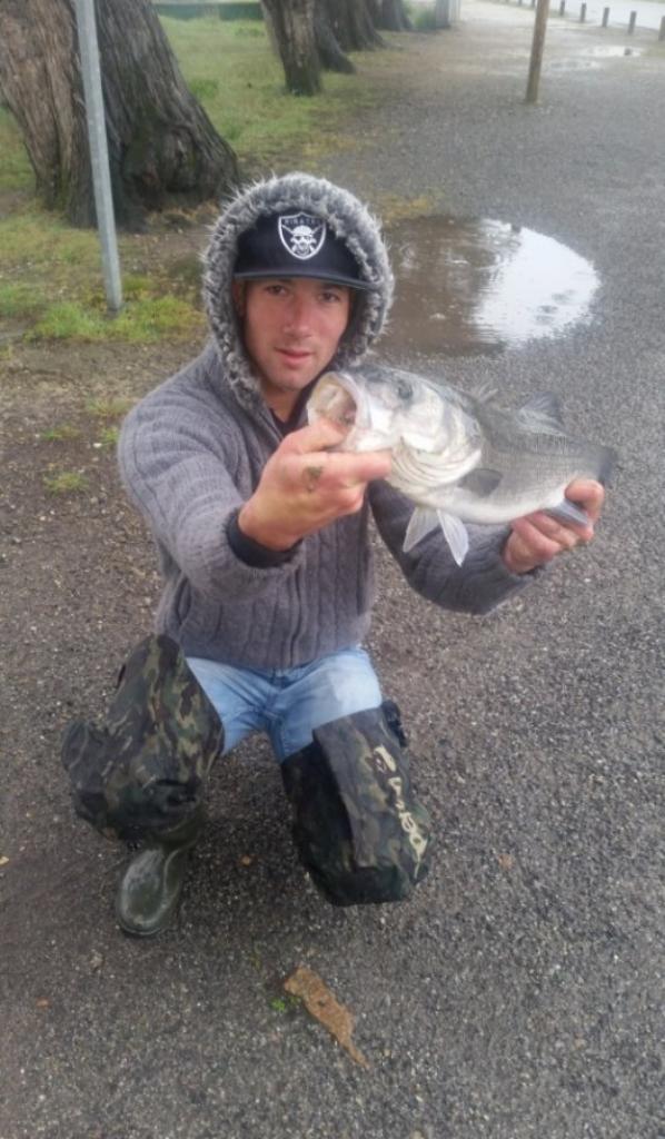 pêche du bar en texan