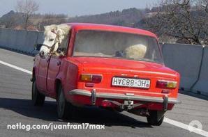 humm ils ont les chameaux ; ont a les scooters ::hi  hi